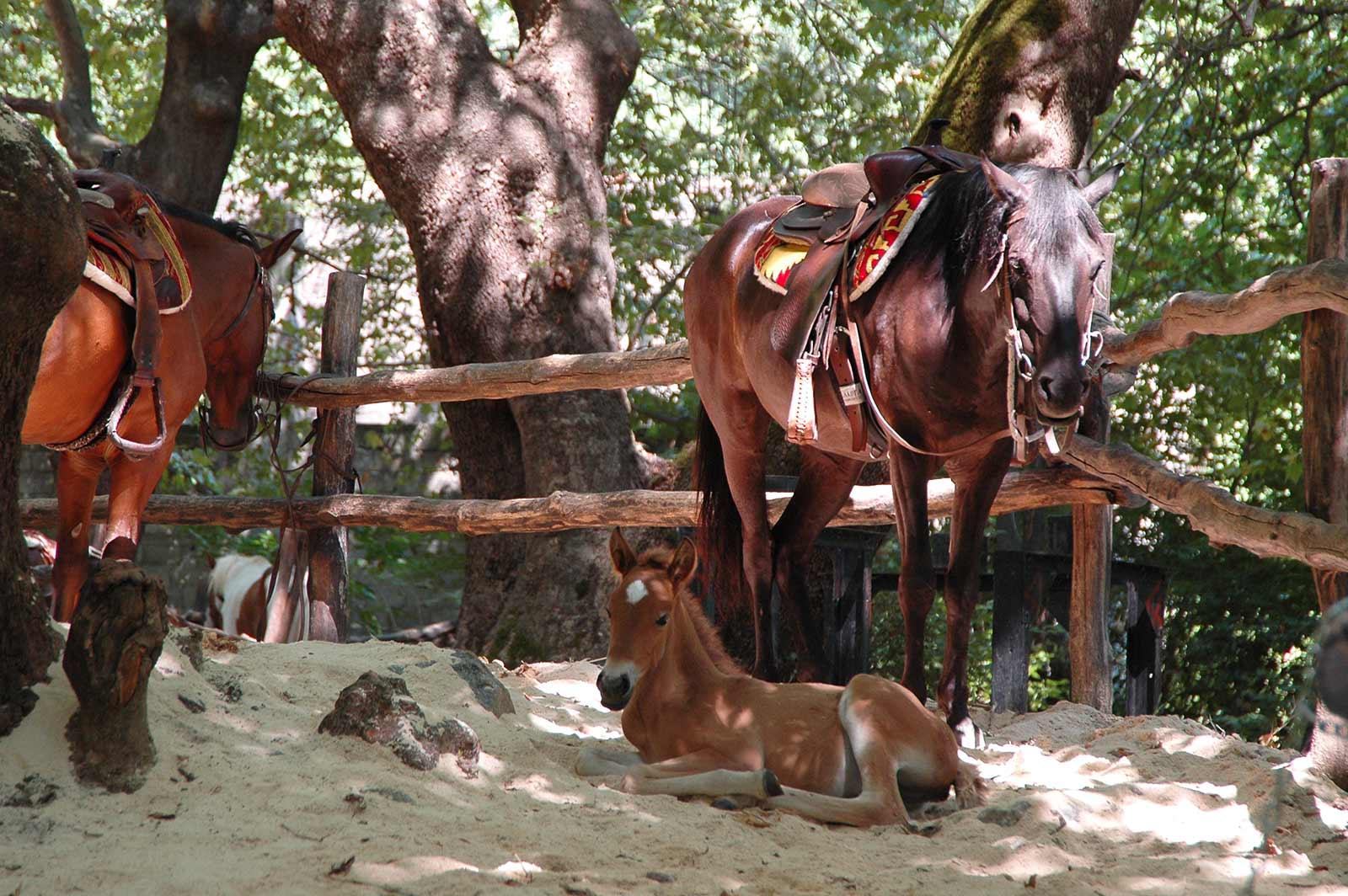 activities - horse riding